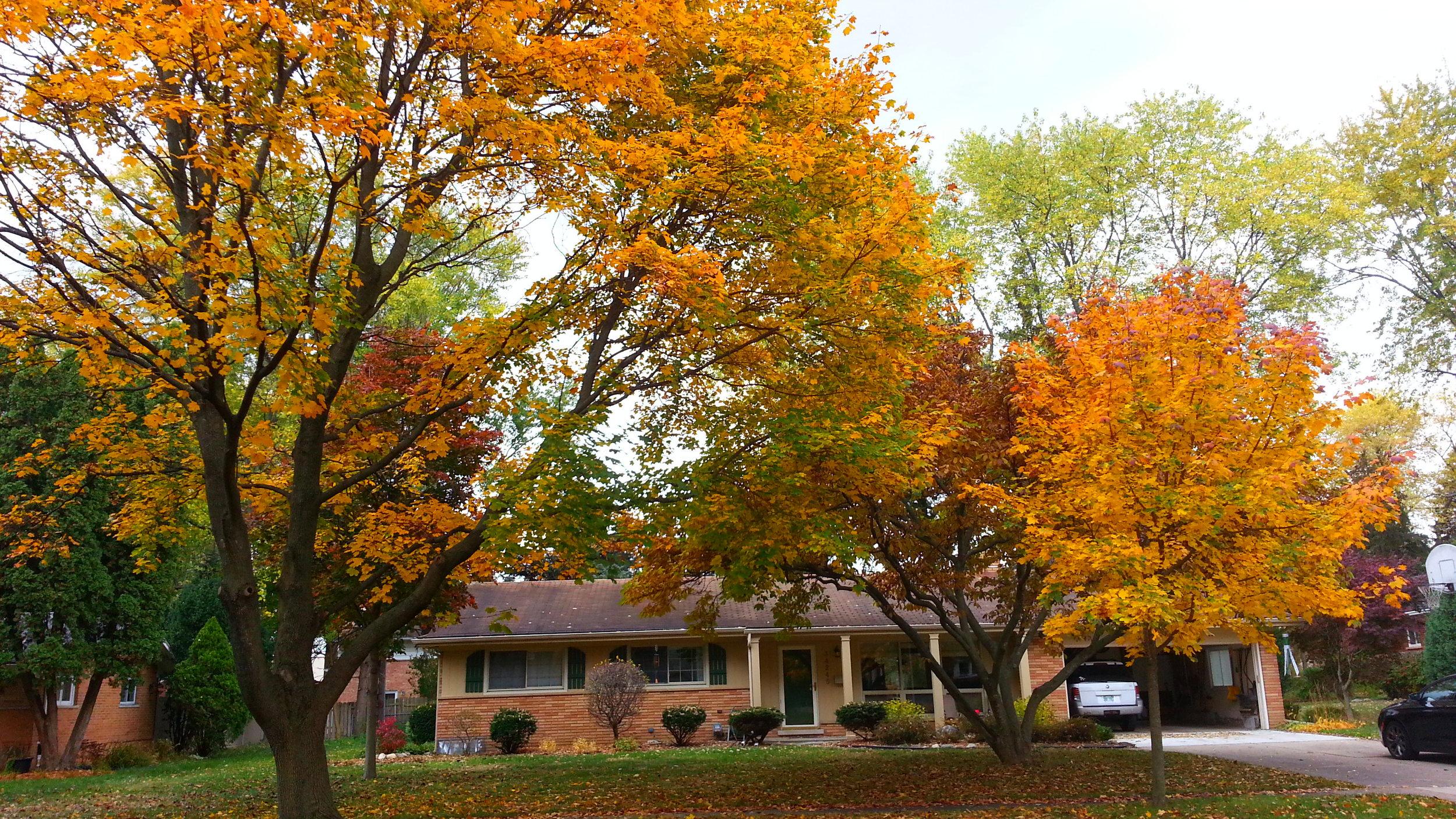 Fall at home, 2010