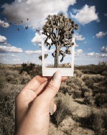Joshua Tree @annamcnaughty