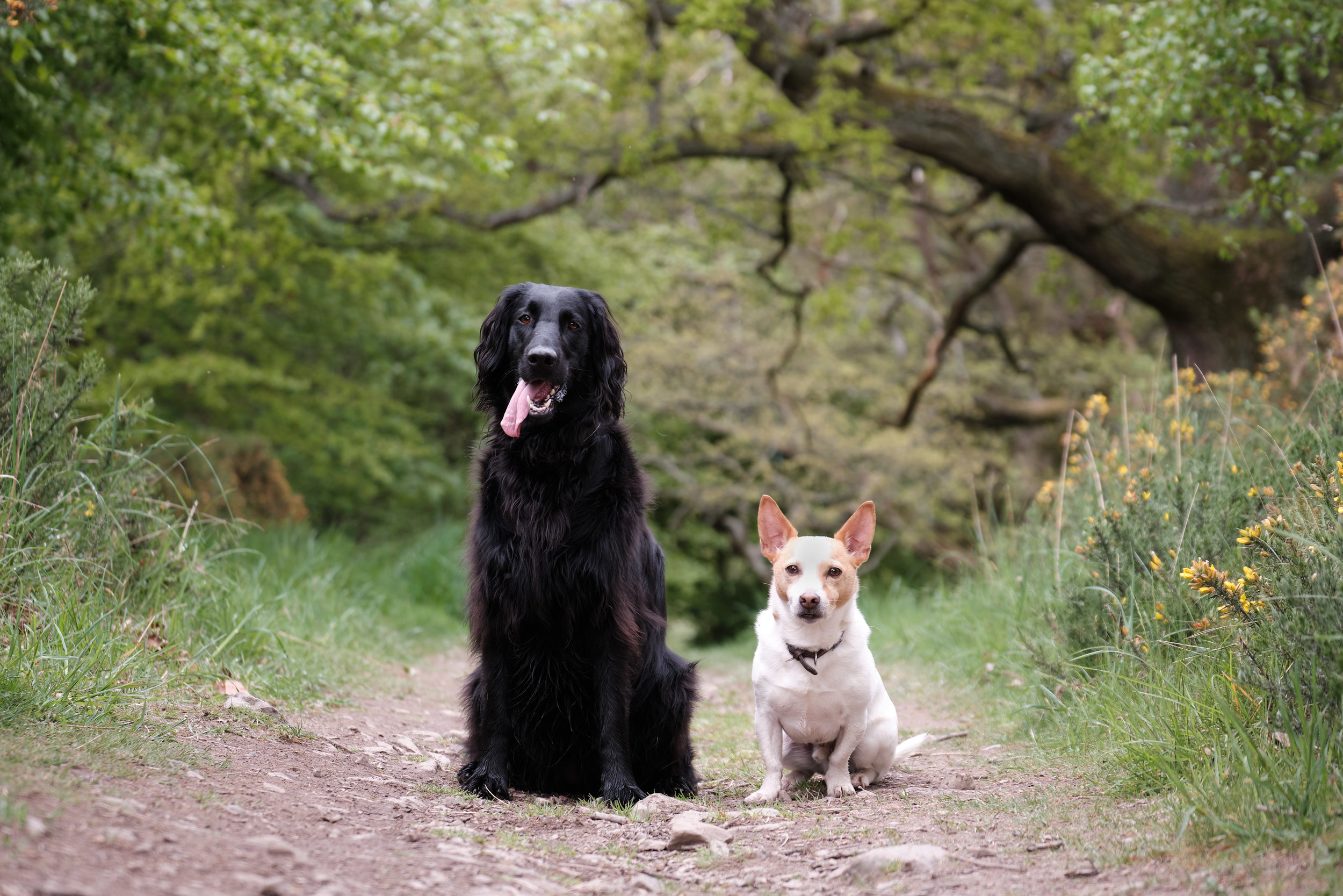 FredandMartha_FetchandFlash_EdinburghDogPhotographer 19.jpg