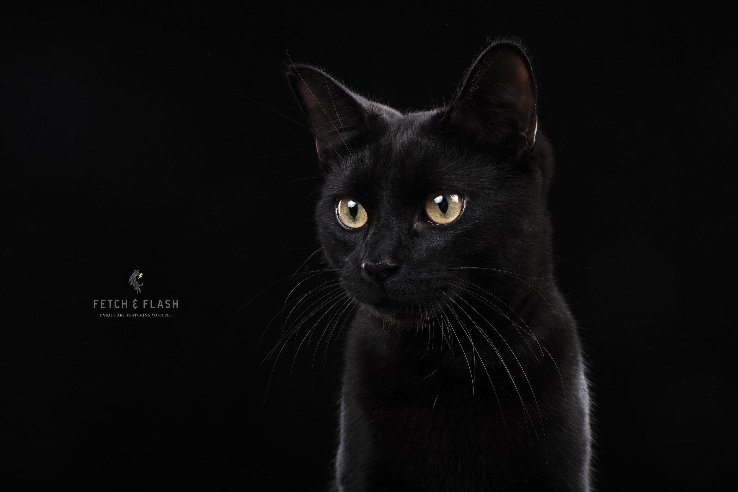CatPhotoScotland.jpg