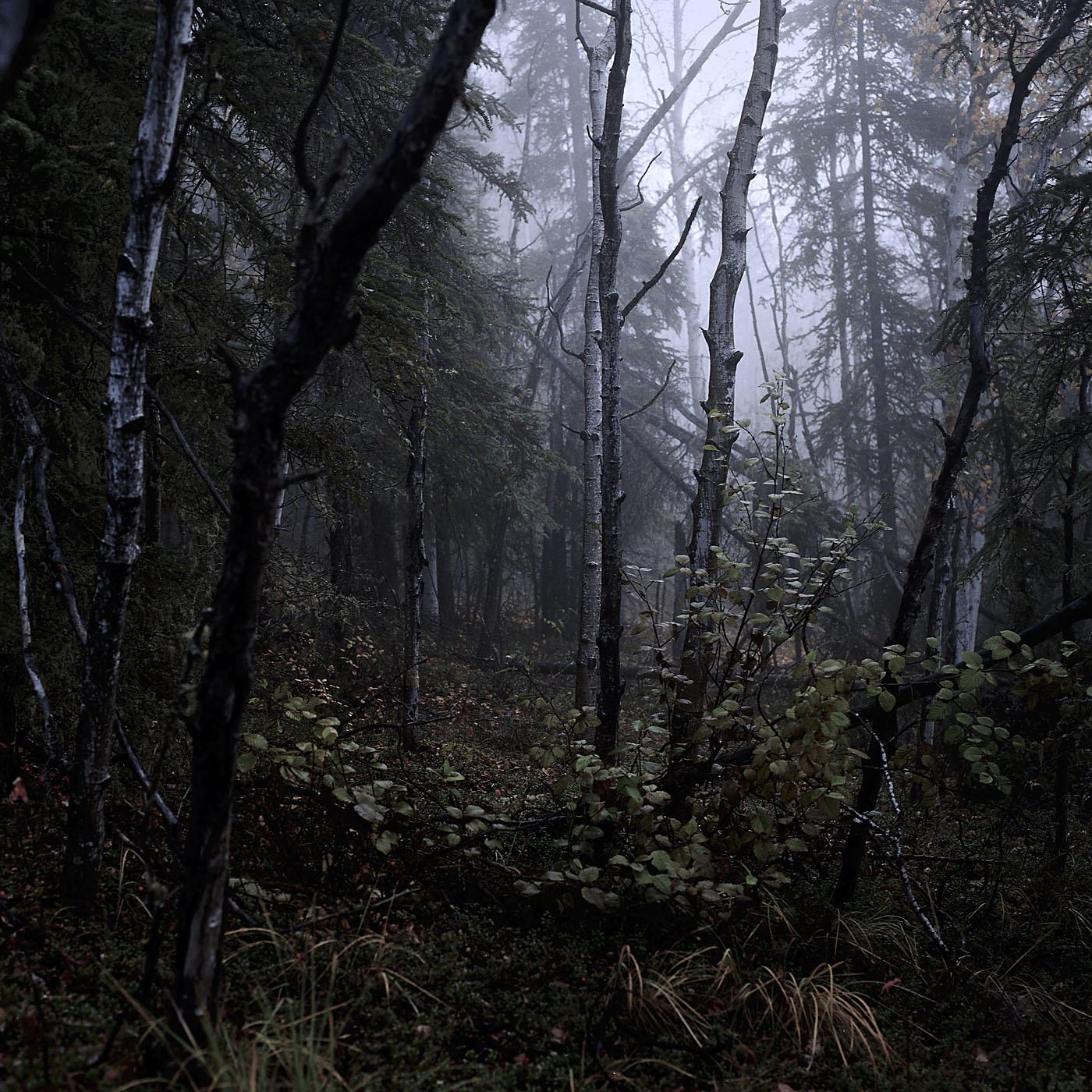 Woods_v01.jpg