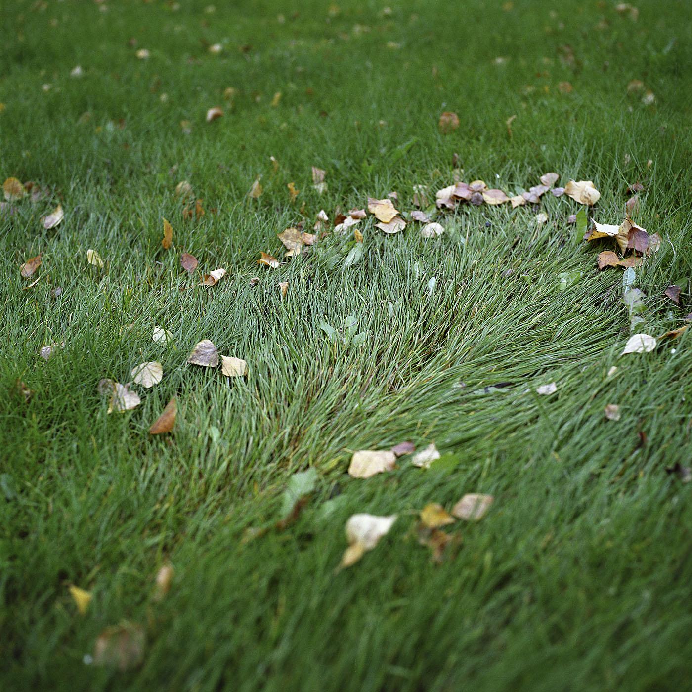 The Lawn_v01.jpg