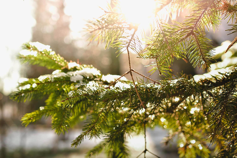 Event-Christmas-Tree-tny.jpg