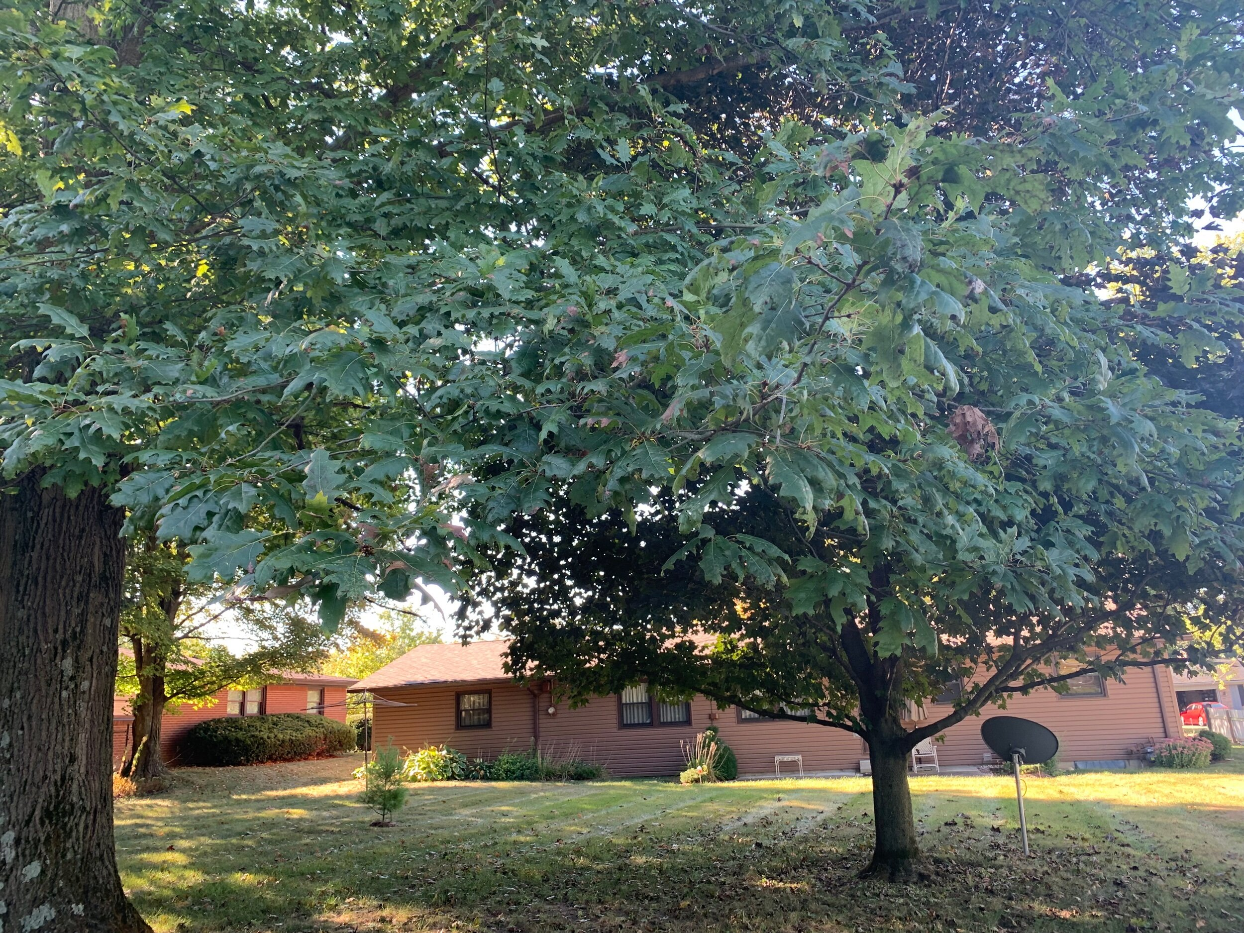 Real estate auction. OCtober 26, 2019 at 1:00