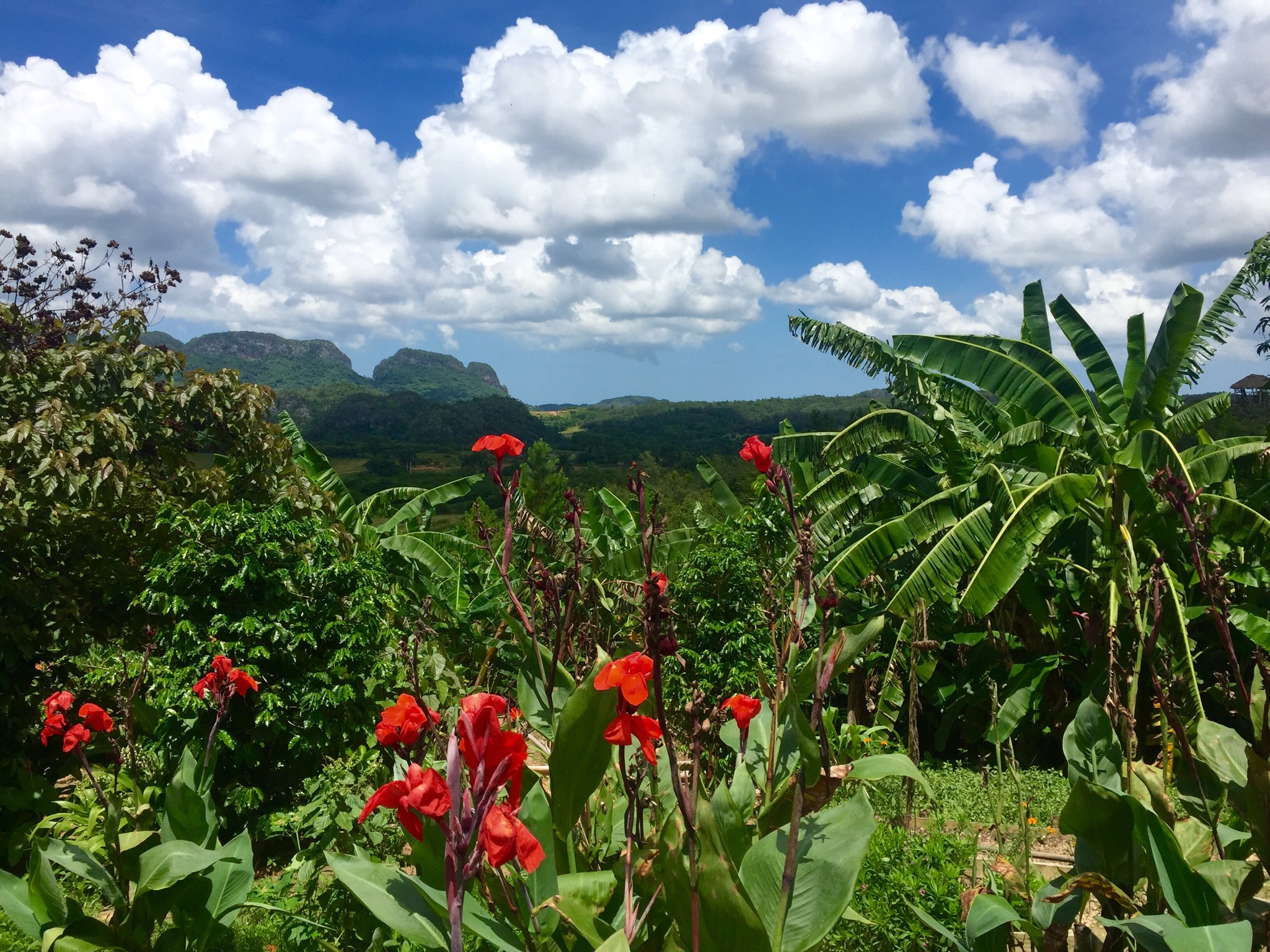 drop everything and head to Viñales