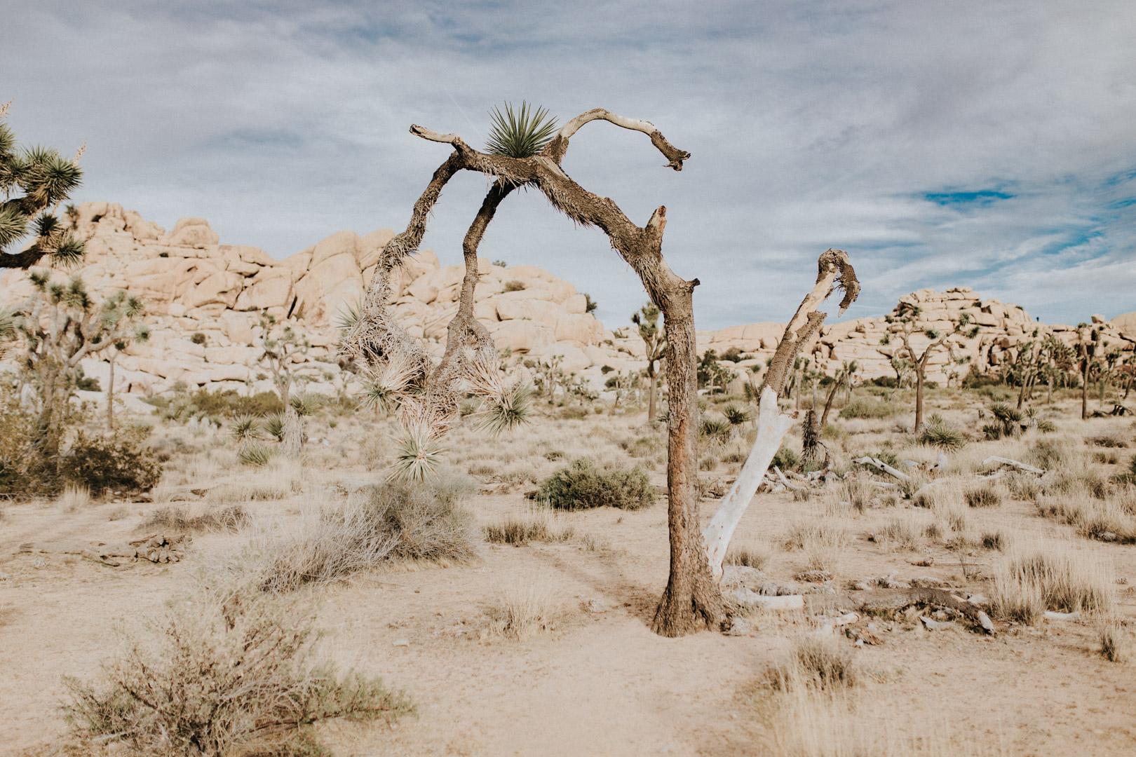 Joshua_Tree-309.jpg