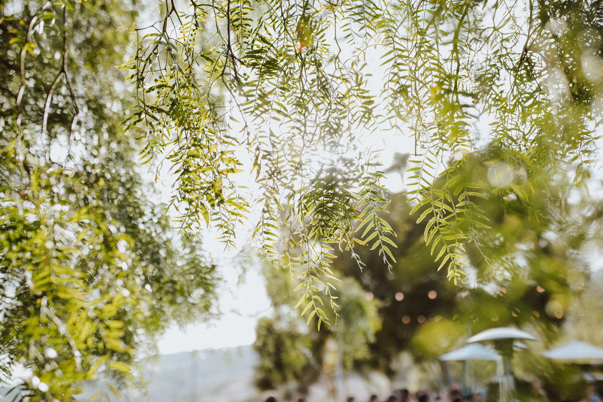 Palos-Verdes-CA-Vineyard-Wedding-124.jpg