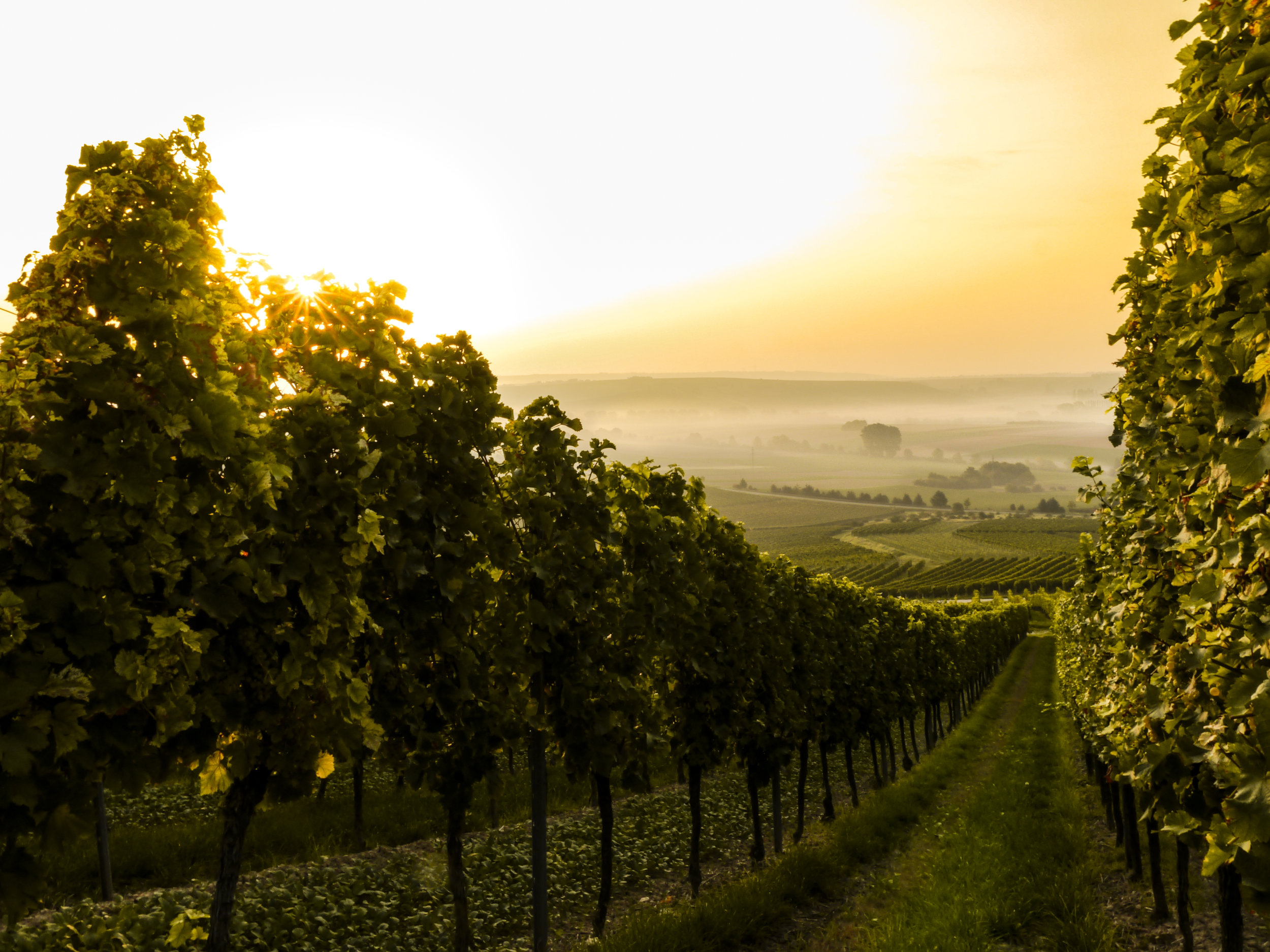 Our Locations dinner will feature wines from New Zealand, Spain, France and California.