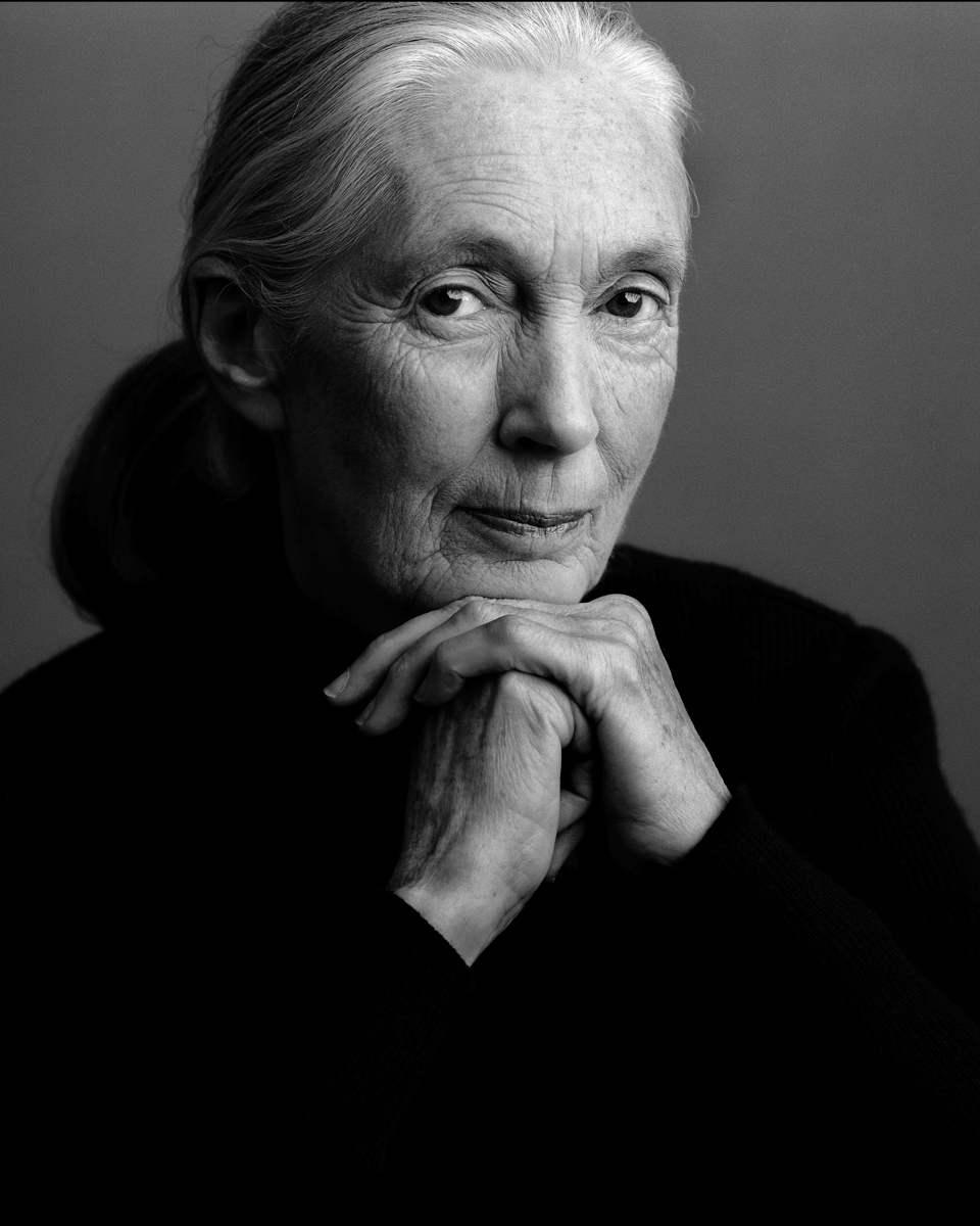 """Jane Goodall  """"Only if we understand, will we care. Only if we care, will we help. Only if we help shall all be saved."""""""