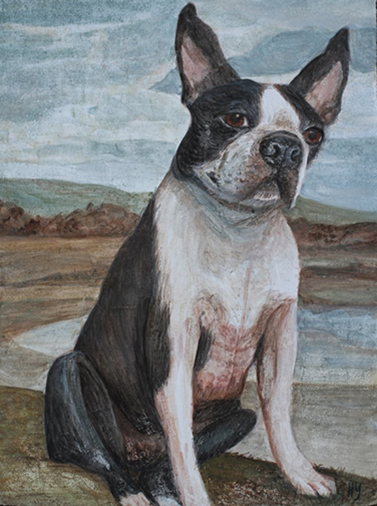 Cosmo the Boston Terrier