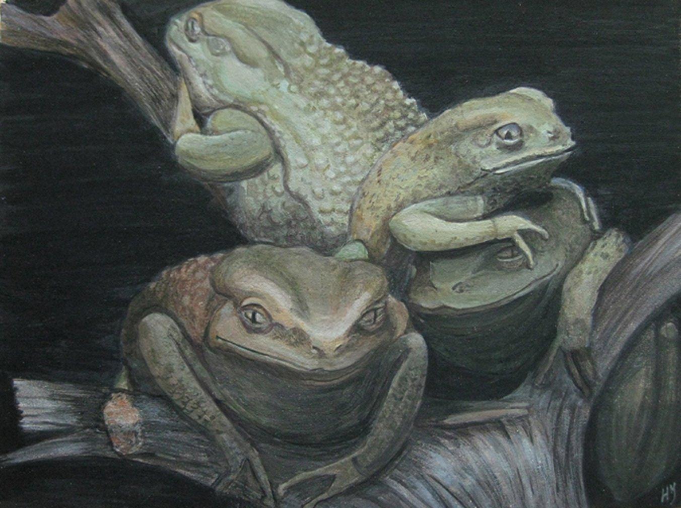 Waxy Tree Frogs