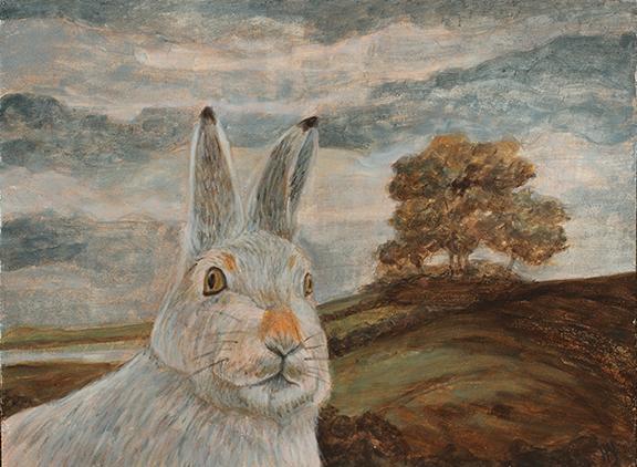 Indignant Rabbit