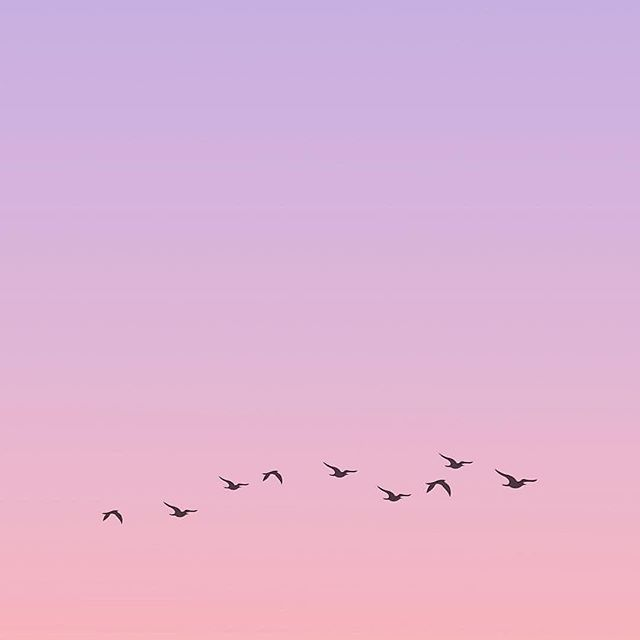 Flying into Wednesday in pastel style 🕊🕊💕 . 📷: @mineispastel . #pasteldreams #pastel #pastelsky #pastelskies #melbourneblogger #melbournebloggers #aussieblogger #gdaygirl #wednesdaymotivation