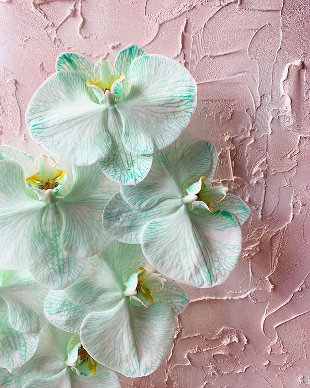 The perfect pastel combo 🍬🌸 . 📷: @flowersbybrettmatthewjohn . #flower #flowers #plantsonpink #pastelwall #pastel #pastelperfection #orchid #orchids #plantsonwalls
