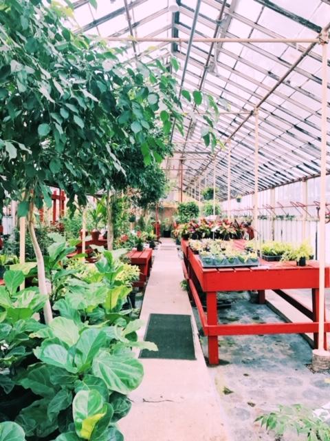 Greenhouse at Evergreen Garden