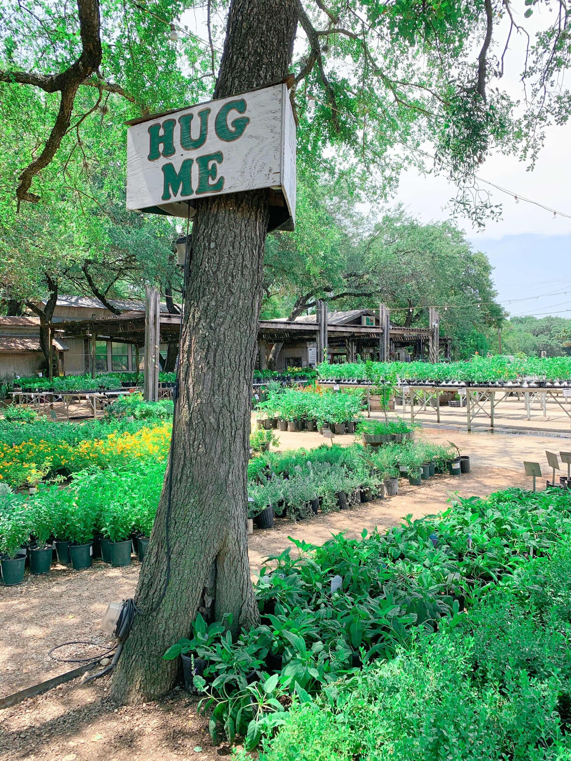 The Best Plant Nurseries In San Antonio