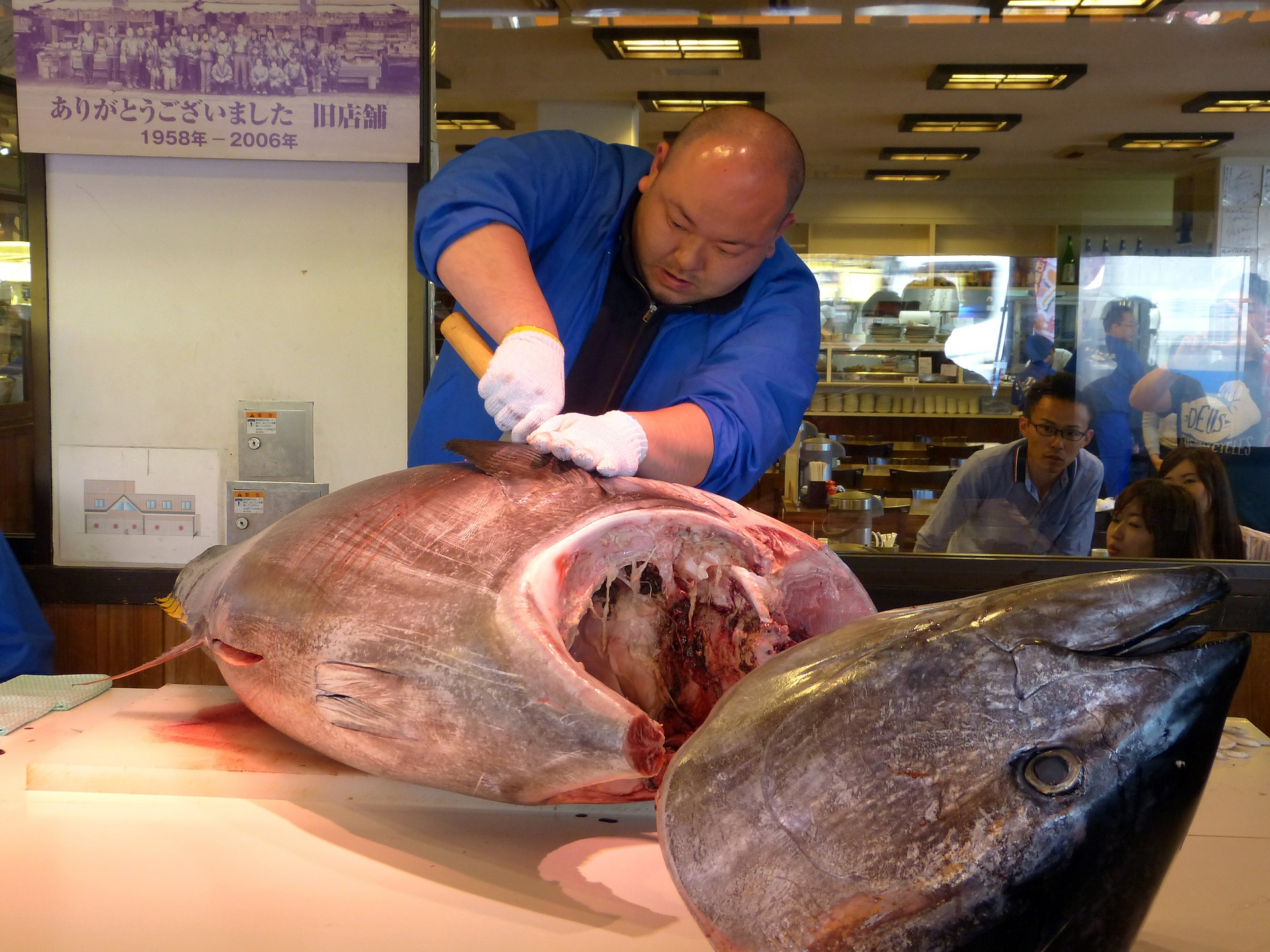 fresh tuna, hokkaido is the japanese home of seafood
