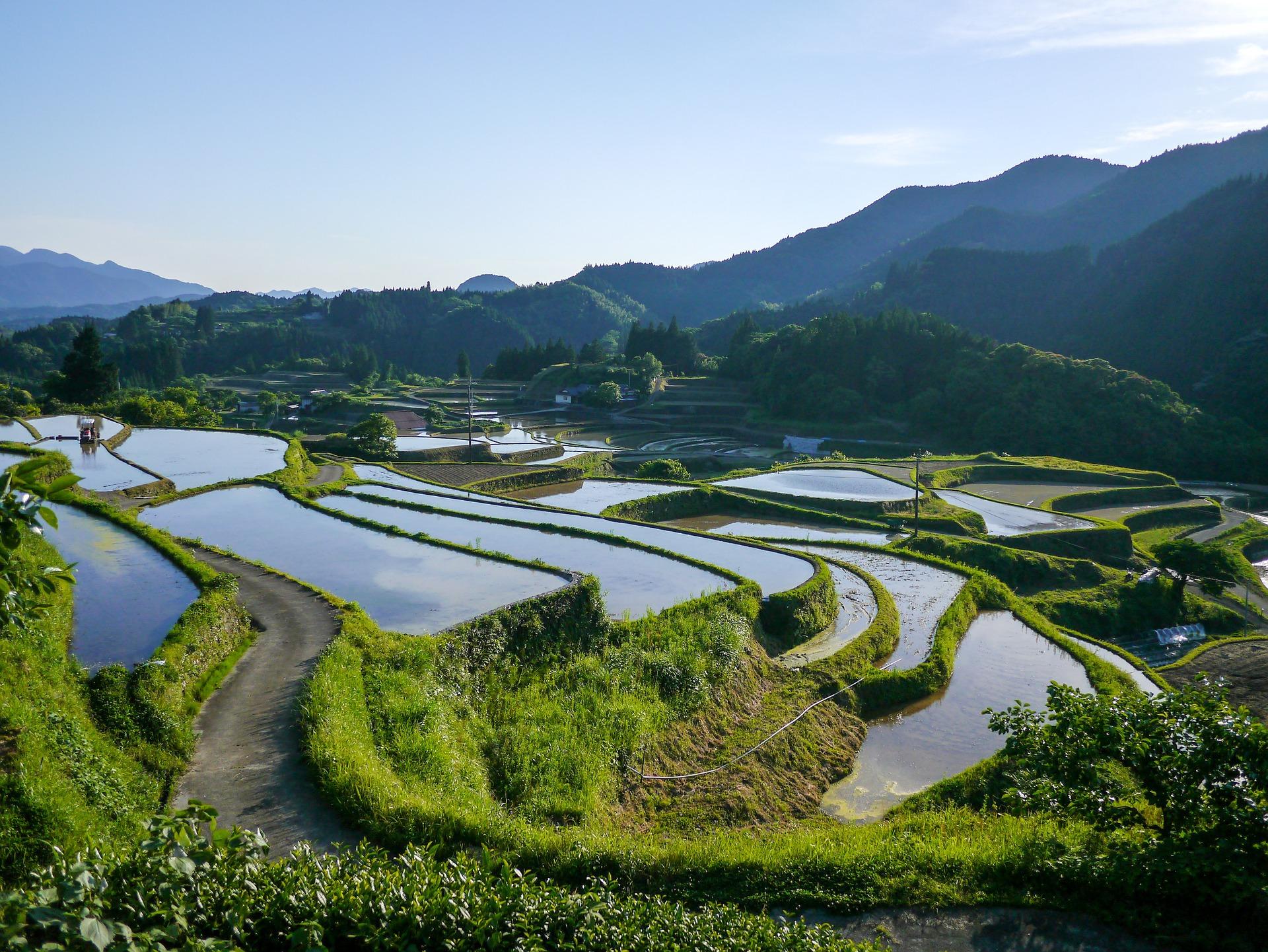 kumamoto rice terrace