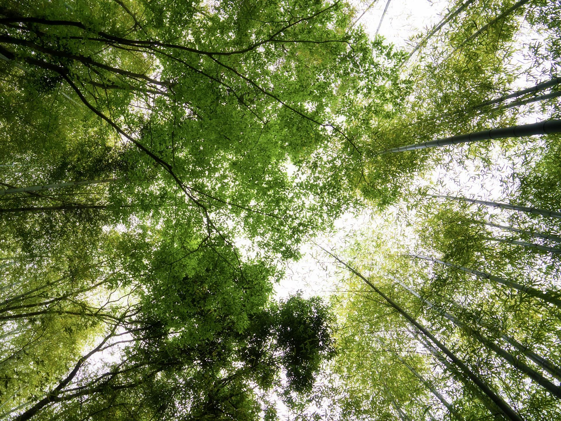 bamboo forrest kumamoto