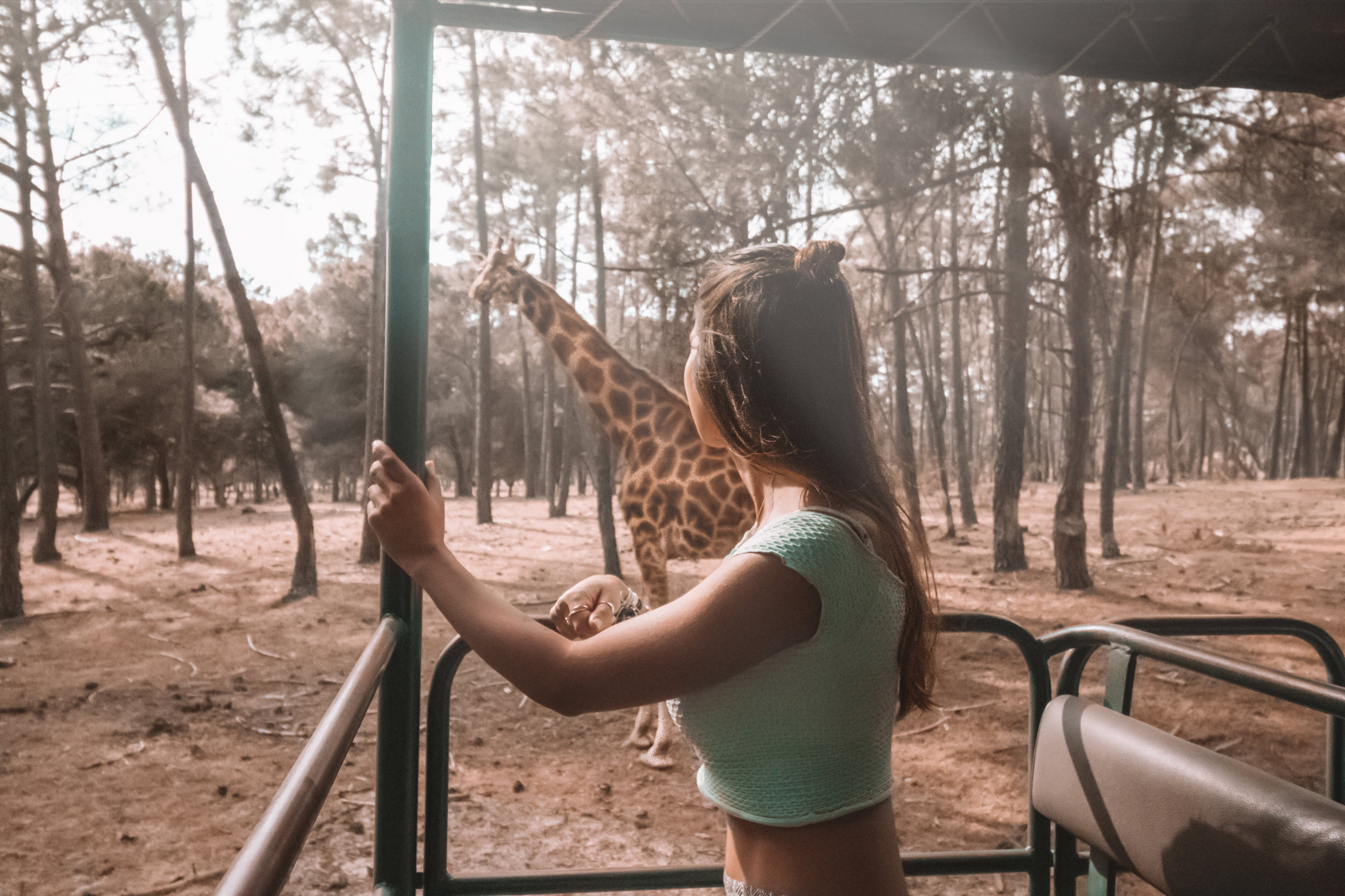freeoversea at badoca safari park giraffe travel couple photography wildlife animals