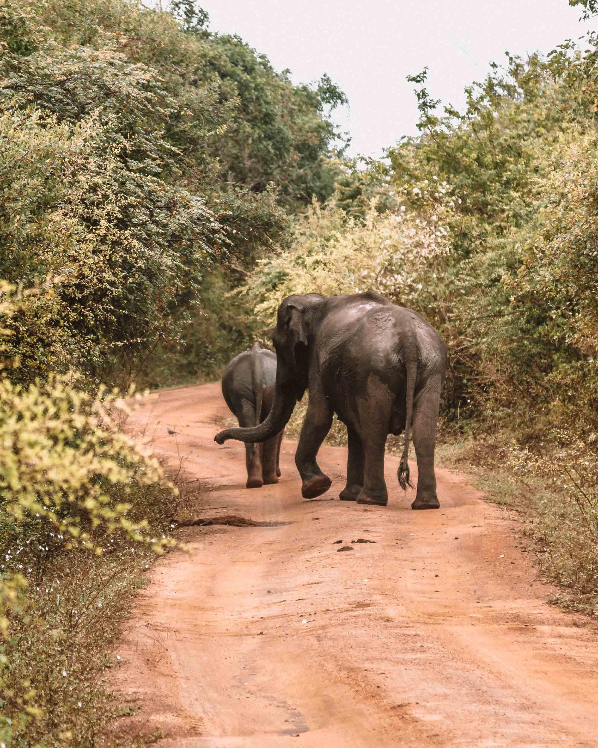 Yala national park Chena Huts uga escapes safari ride wildlife mom and baby elephant