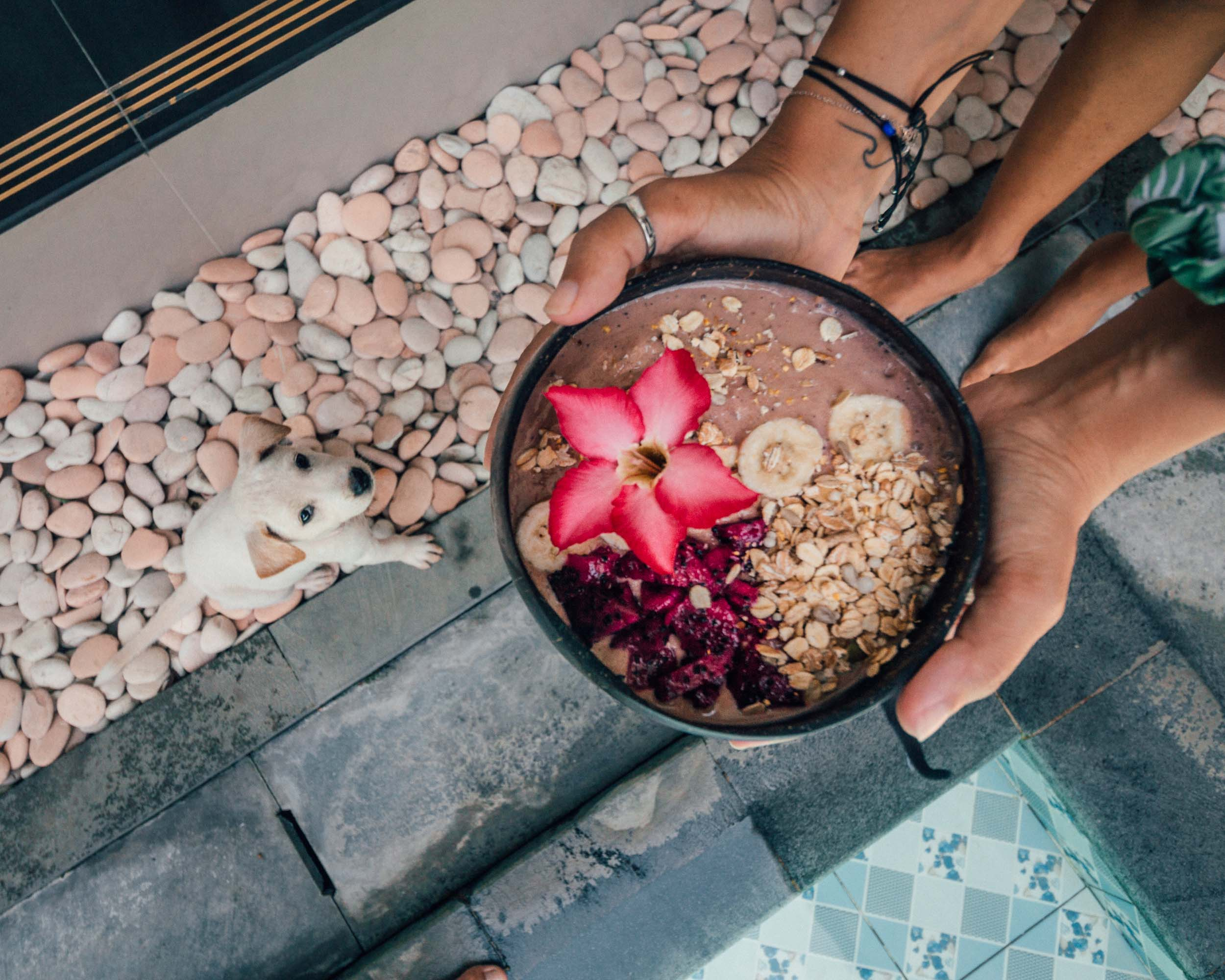 The best coworking space in Bali surfing nomads digital remote work community smoothie bowls and puppies