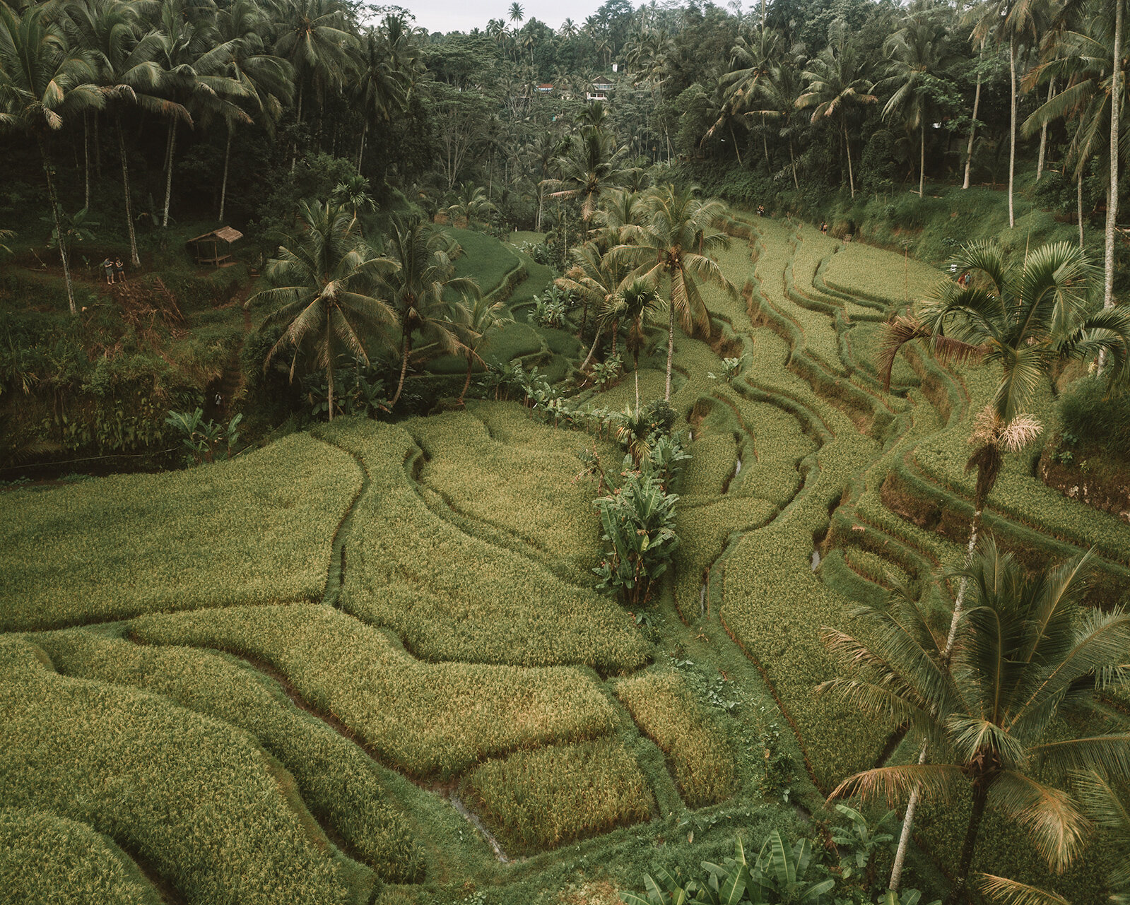 Tegallalang Rice Terraces Ubud aerial view, best place to photograph Bali travel guide