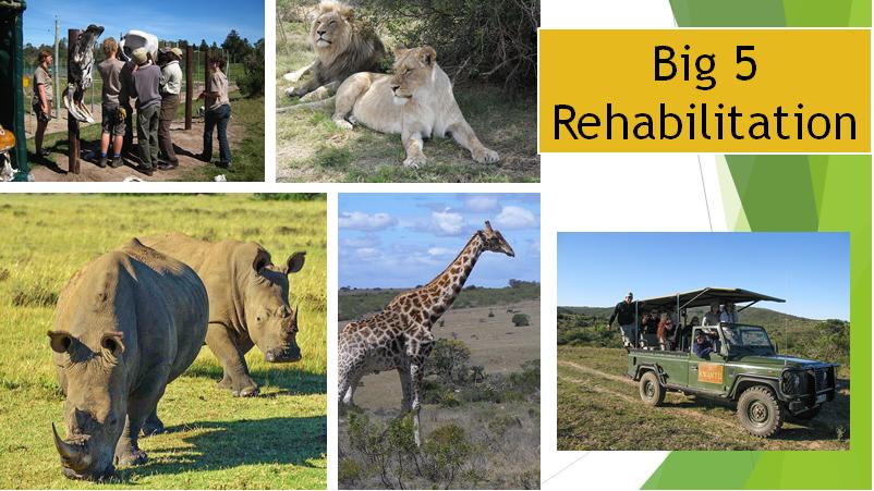 Big 5 Rehabilitation - Esta reserva - safari visa contribuir para a reabilitação de animais de grande porte como elefantes, leões, rinocerontes, leopardos e búfalos bem como a manutenção da reserva. A popularidade desse projeto é uma oportunidade maravilhosa para fazer amigos de todo o mundo.