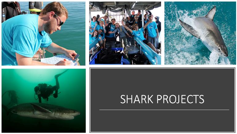 Shark Project - Um projeto baseado no oceano que visa unir pesquisa cientifica e participação pública na proteção do grande tubarão brancoda África do Sul. Os voluntários trabalham em estreita aproximação com tubarões e turistas e, ao fazê-lo, aumentam a conscientização da necessidade proservação dessas maravilhosas criaturas.