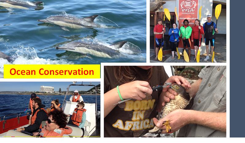 Esse projeto é dedicado à conservação do ambiente marinho através de pesquisa, disposição para ajudar e dedicação. Ao participar desse projeto você pode fazer uma verdadeira mudança para a natureza e no litoral da Africa do Sul.