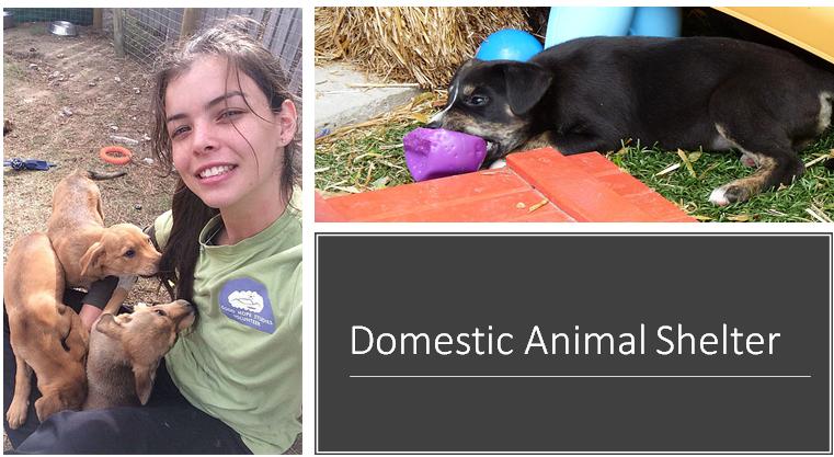 1 Este centro é uma organização pró-vida sem fins lucrativos cujo principal objetivo é resgatar, reabilitar, recolocar cães e gatos abandonados, abusados  negligenciados.