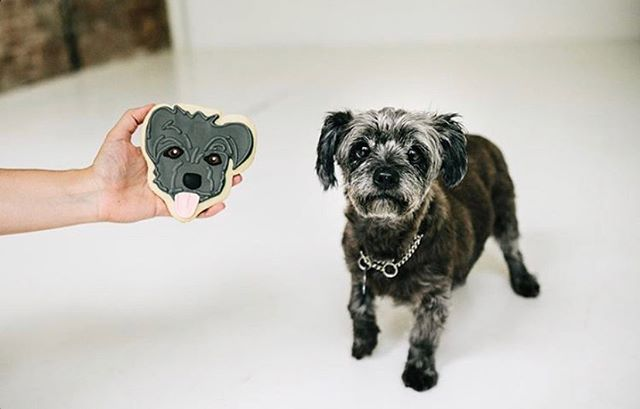 Seeing d🍪uble! A cookie doppelgänger for @gizmo.nyc . . . 📷: @chazcruz . . . . #adoptdontshop #dogcookies #dogsofinstagram #portraitcookies #selfiecookie #bakersgonnabake #baketheworldabetterplace #customcookies #cookiesforacause #cookies #sugarcookies #decoratedcookies #royalicing #royalicingcookies #edibleart #sprinkles #cookieart #cookiegram #icing #brooklyn #brooklynbaker #madeinbrooklyn
