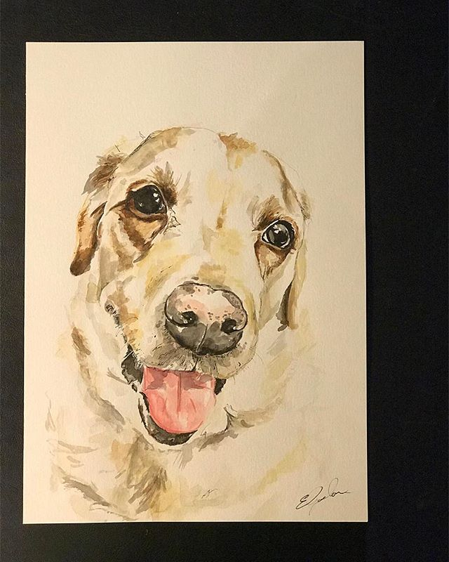 This gorgeous boy is on his way to @cameronthayan  Thank-you for the commission! {A4 Watercolour And fineliner}