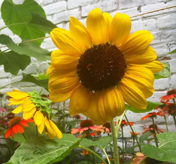 sunflowergarden.png