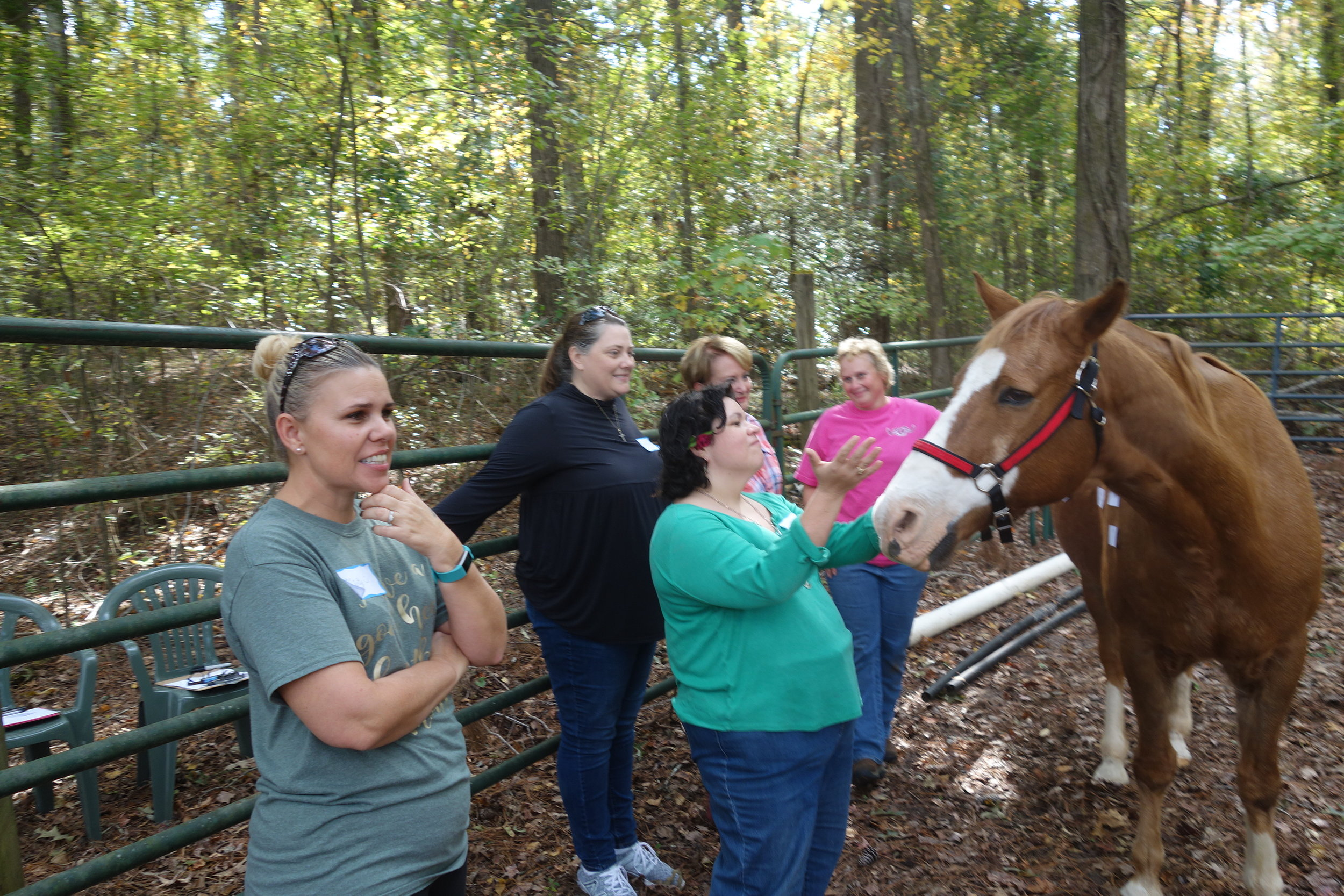 A successful Equine Encounter for Horse and Humans!