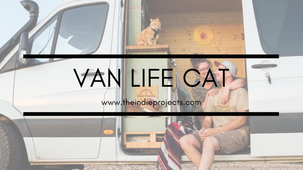 van life cat