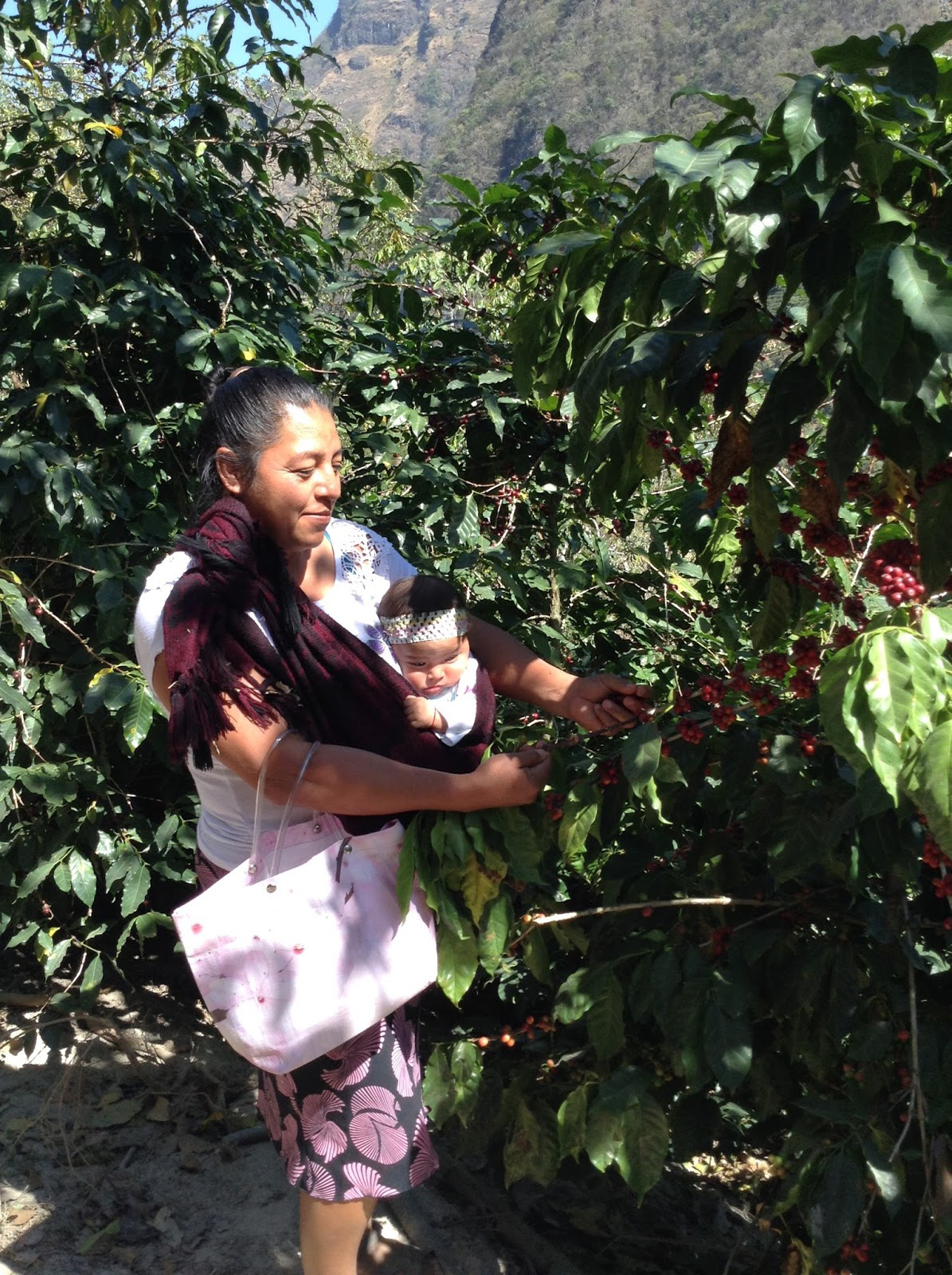 Maria Luz with baby showing us her coffee.