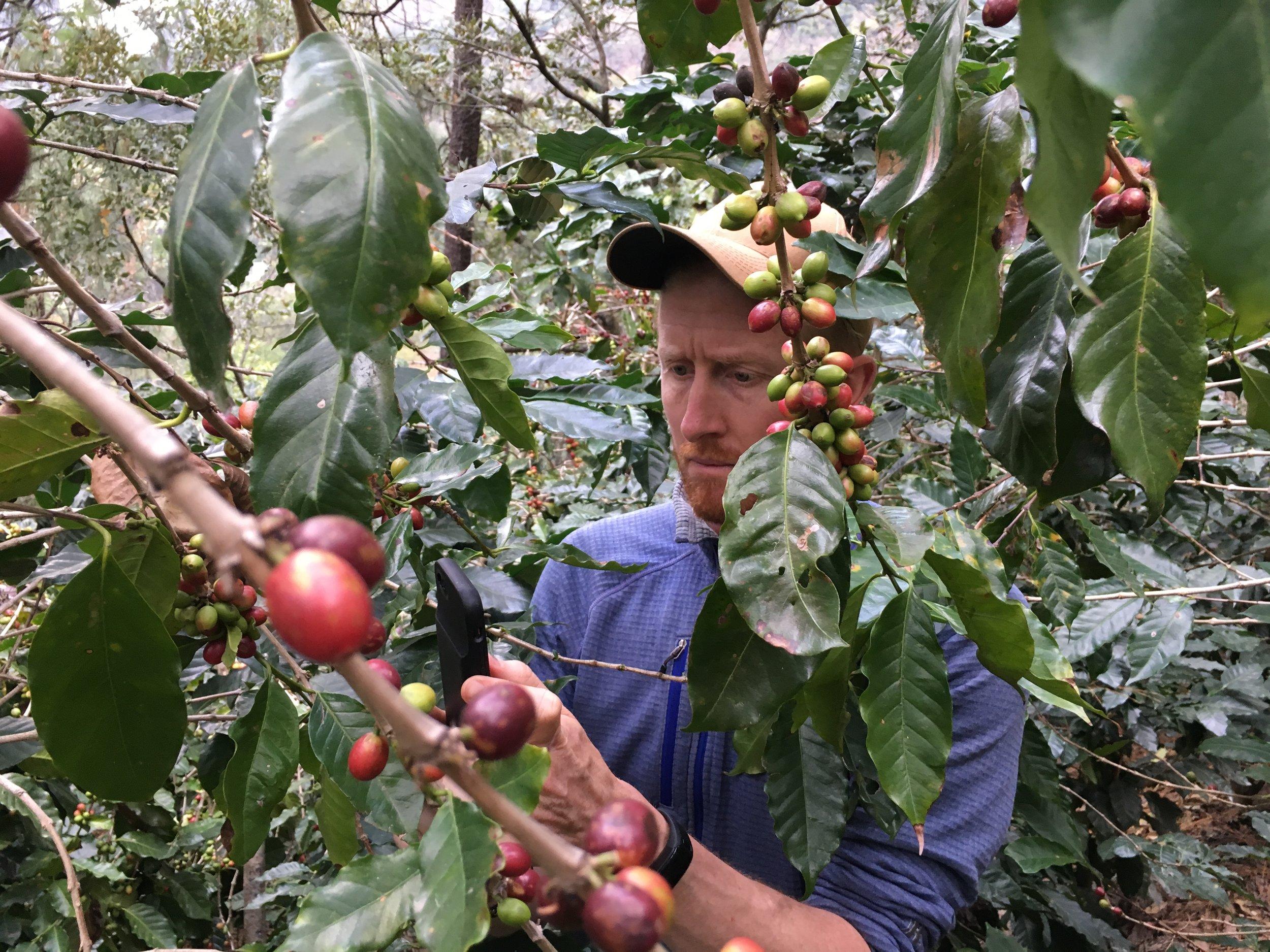 Pete in the coffee fields.