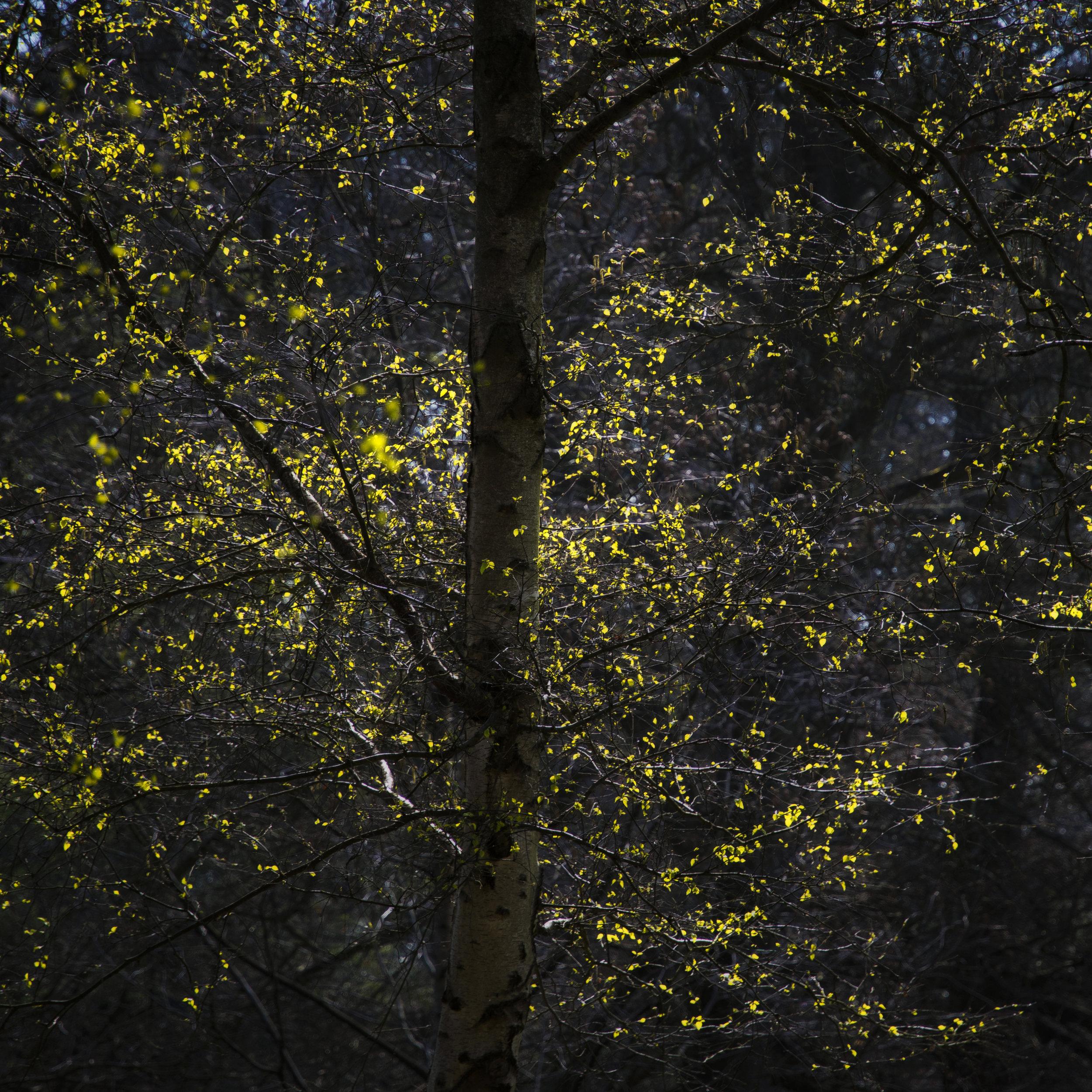 matt-holland_firefly leaves.jpg