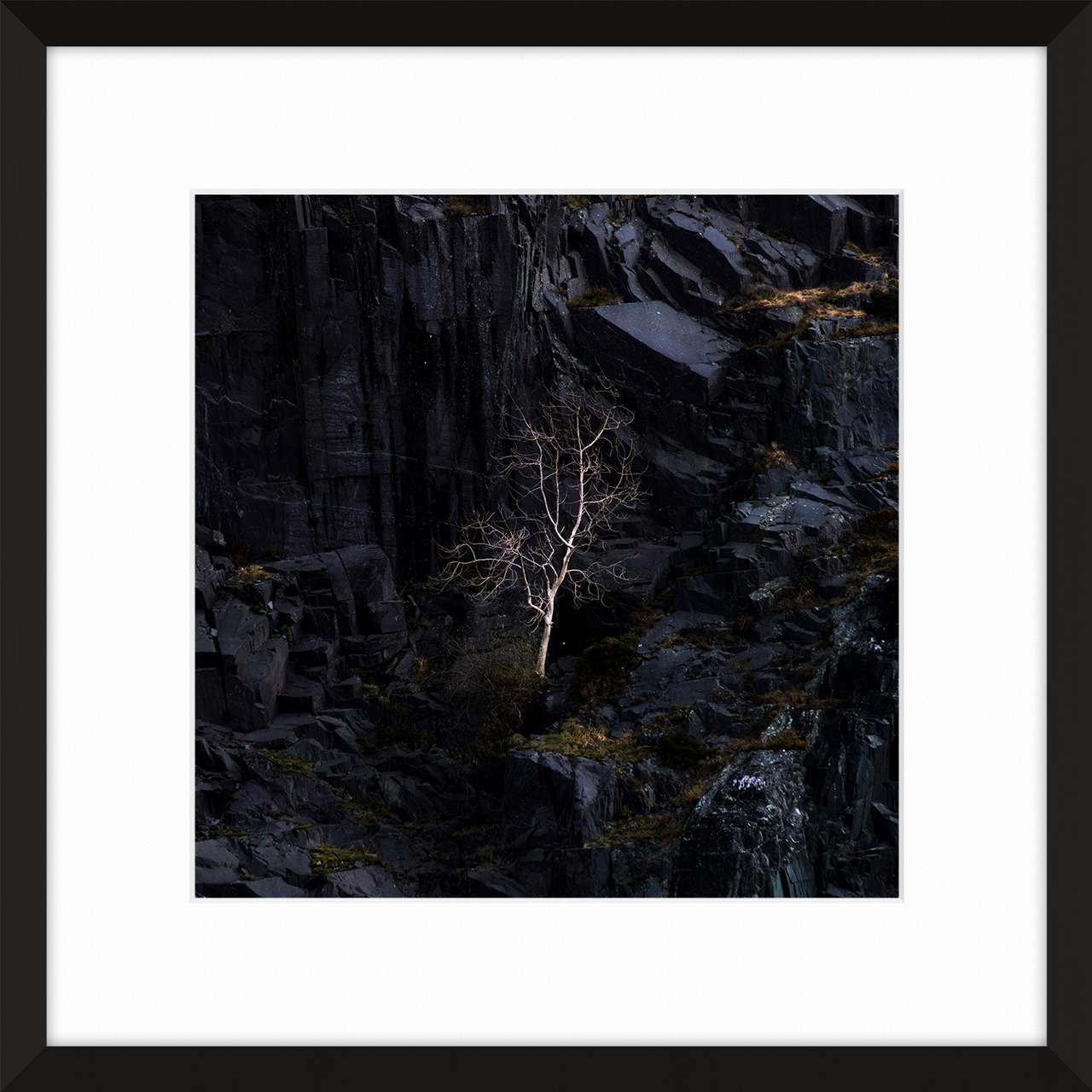 Little Dinorwic Tree - One of the many trees scattered across this giant slate quarry and mountainscape of Dinorwic, Llanberis, Wales. This being the most prominent trees you notice on the walk in to the quarry. The lone silver tree standing above the lake, Dali's Hole.Prints are available from Treacle Gallery in 4 different size options and frame colour options to match your interior perfectly. Bespoke sizes and framing options available contact us for more information.