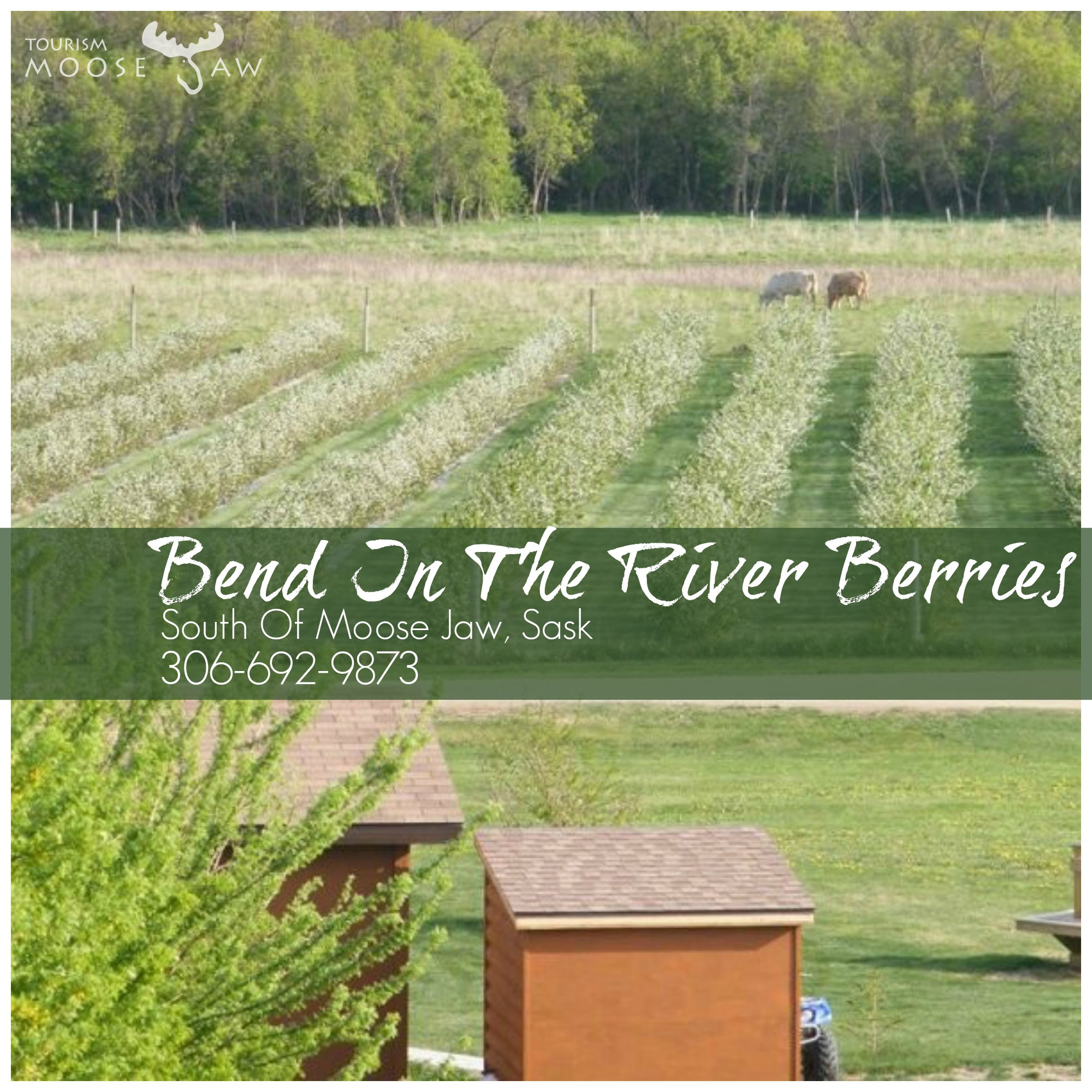 Bend in the River Berries.jpg