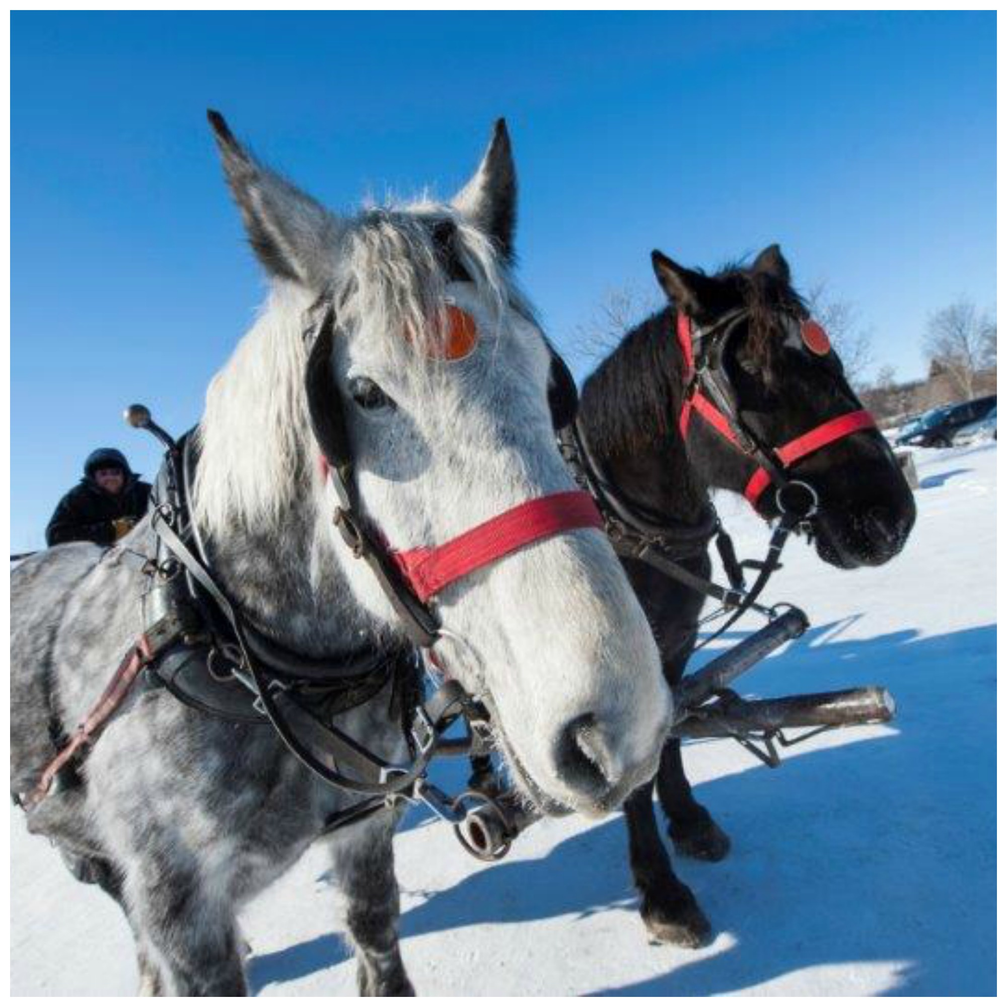 Winter Wagon Rides, December 31st from 3 - 7 pm.