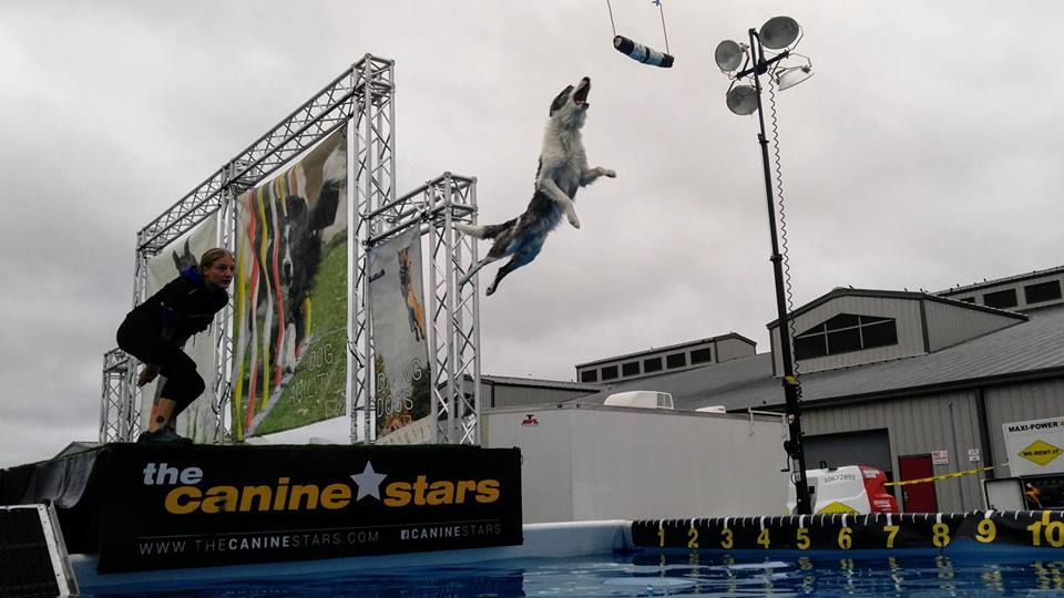 The Canine Stars Stunt Dog Show will be performing in Moose Jaw, SK at the Moose Jaw Exhibition! 3 days of shows from 06/21/2019 to 06/23/2019, it's going to be some amazing stunt dog shows!   Featuring extreme stunt dogs performing Frisbee Freestyle Disc, Agility racing, Freestyle Dance Tricks, High Jumping, and Dock Diving Dogs. Every year The Canine Stars save dogs from shelters, rescue groups or off the streets, but we make the biggest impact by inspiring others to rescue, too. Our aim is to inspire and educate youth...with compassion for the underdog, we demonstrate that teamwork makes the impossible possible.  Please check the Moose Jaw Exhibition website:  www.moosejawex.ca  for details on show times.  For more information about The Canine Stars Stunt Dog Show, visit our website at  www.TheCanineStars.com , or Facebook, Instagram, Twitter @CanineStars, or call Keri at 970-518-4375.