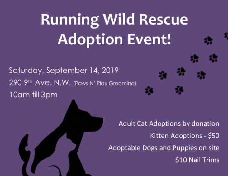 Come and join us for our adoption event! We will have kittens adoptable for $50 and adult cats will be adoptable by donation. We will also have adoptable dogs and puppies on site!