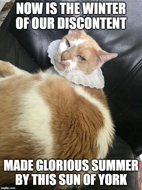 Schrody Shakespeare Meme.jpg