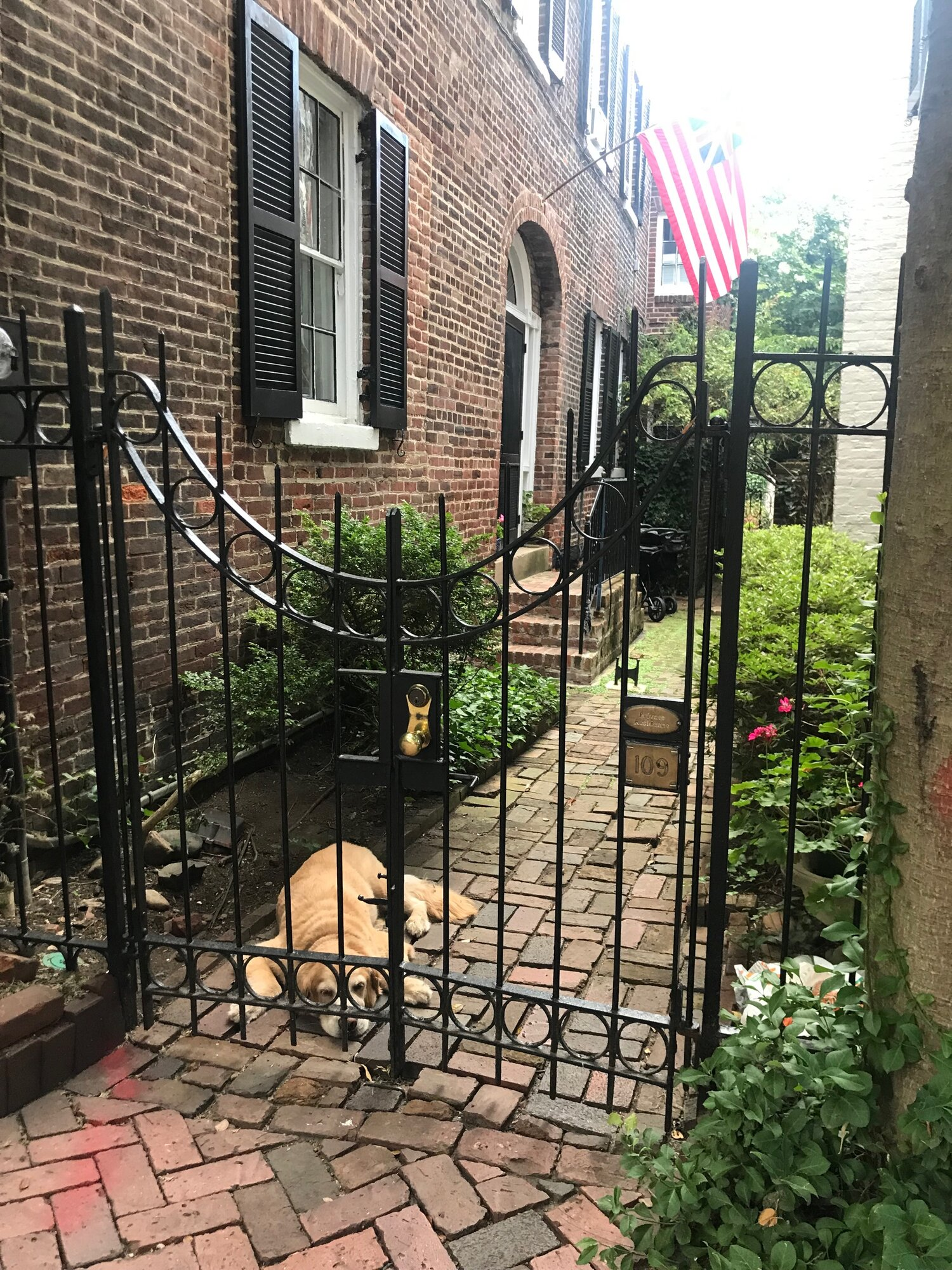 I found this sweet pupper hanging out in Old Town Alexandria near the festival while walking between events one day. <3