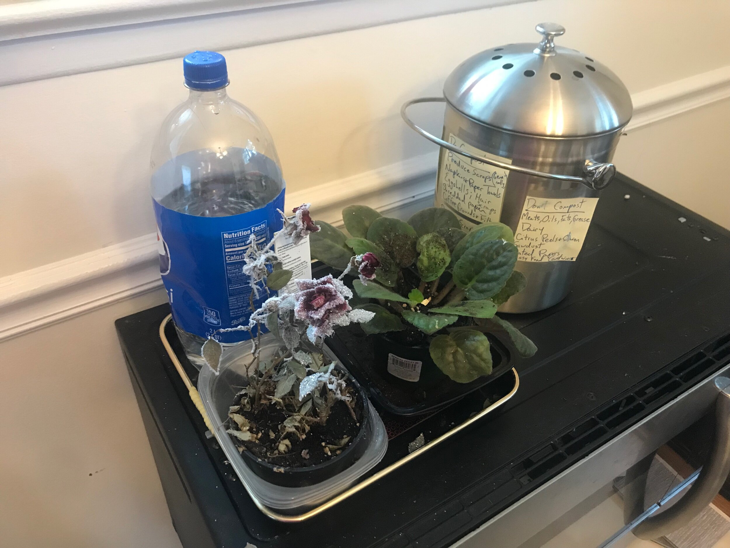 Look! Plants I've somehow kept half alive, plus an old soda bottle I now use to water indoor and outdoor plants, and our compost pail!