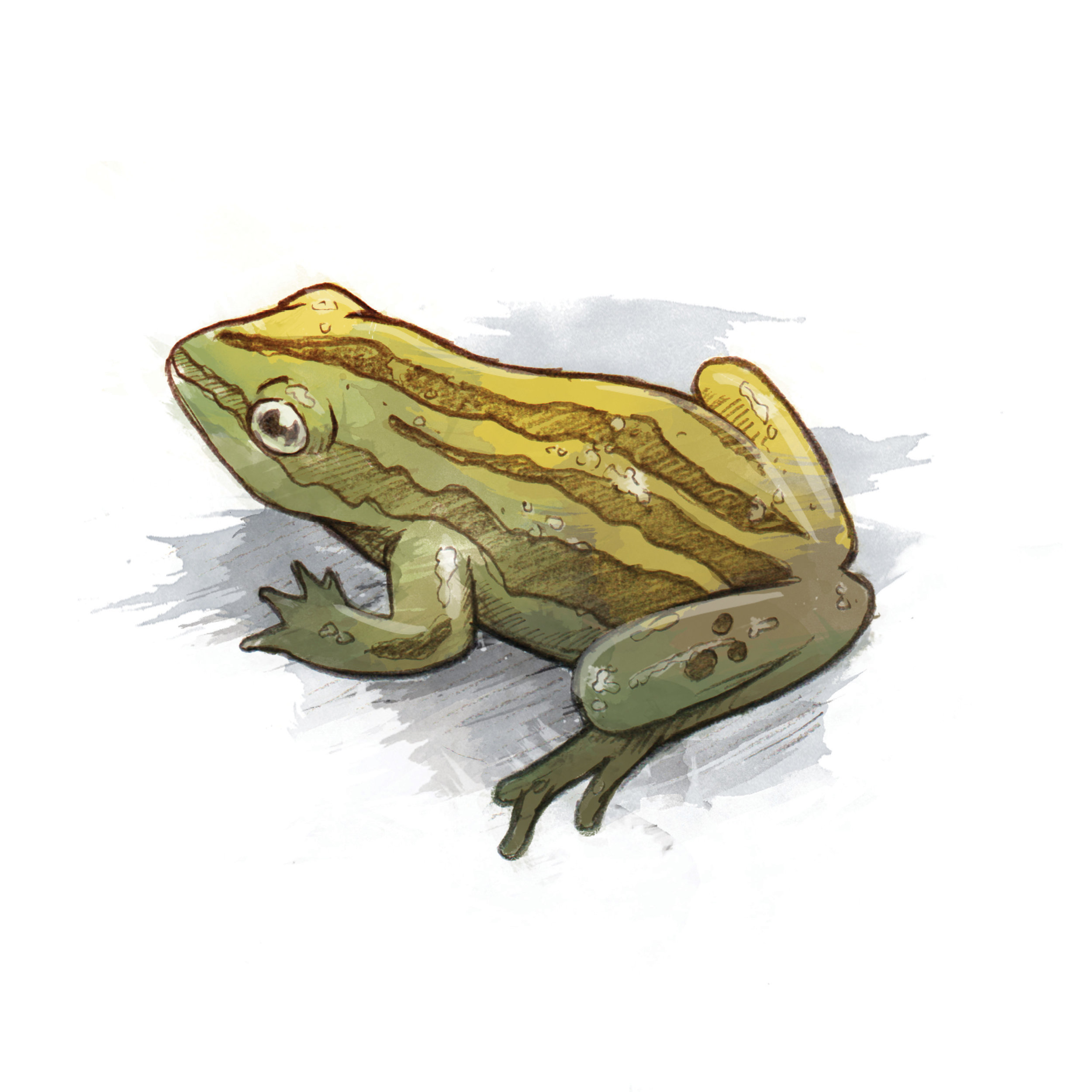 MLC_Keswick_WetlandSignage_Frog_040816_v2.jpg