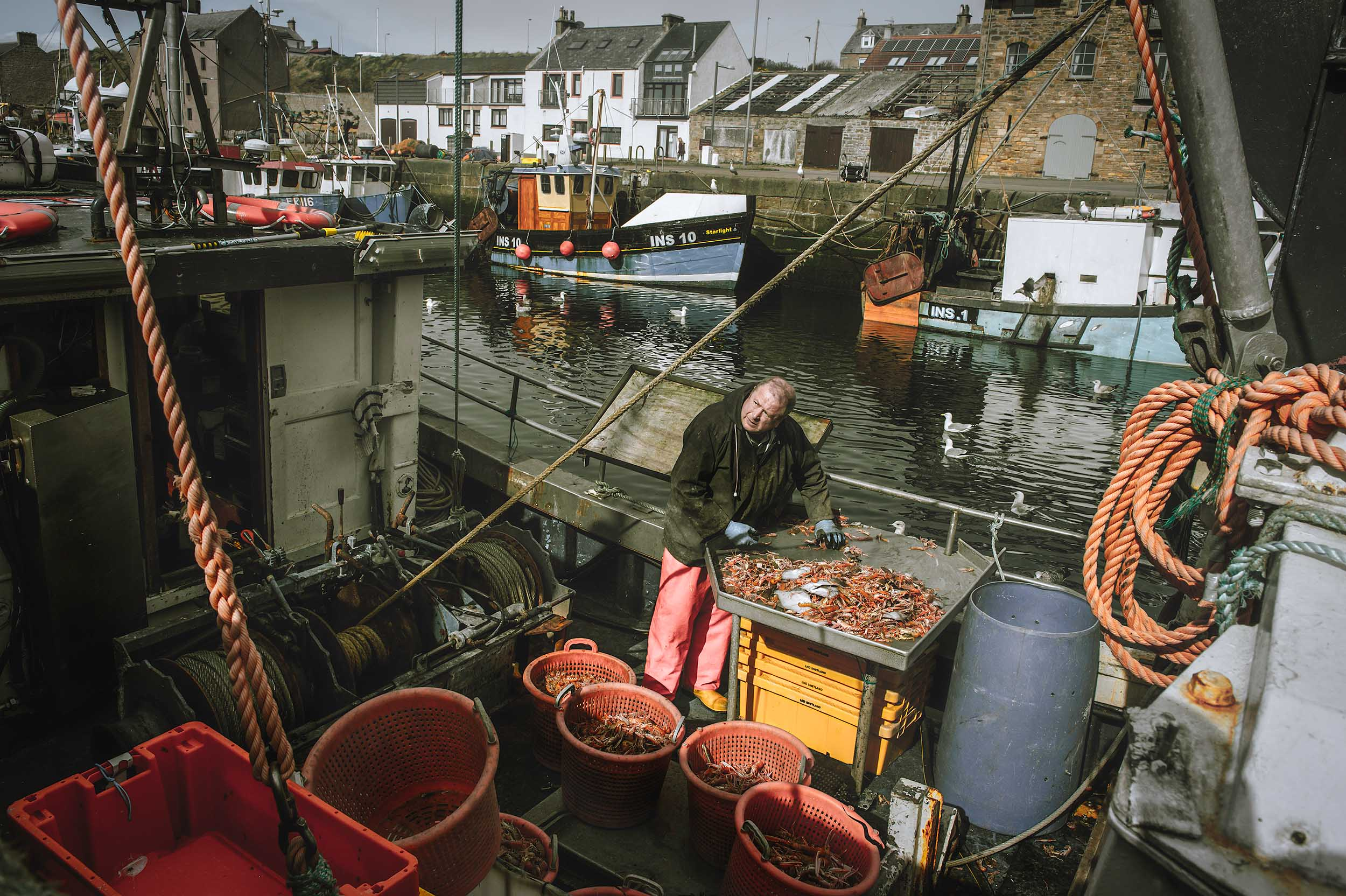 A fisherman arrives back at Burghead Harbour in Moray with a successful haul of Prawns.