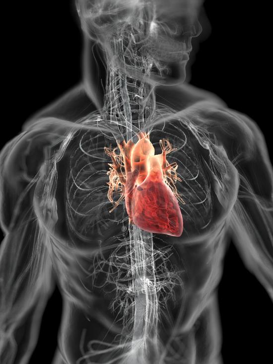 transparent-human-body-0-heart1.jpg